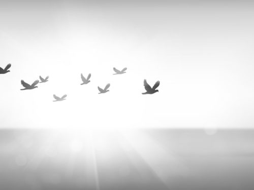 Silhouette flock of bird flying over sea during sunset, freedom concept. Free birds flying together in the sunset sky.