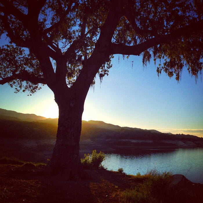 Lake with tree