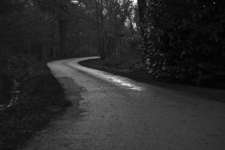 Curved road in between trees